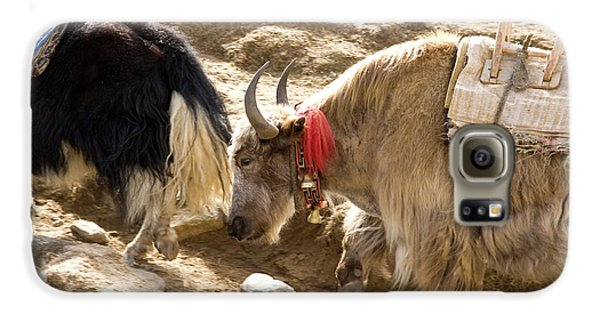 Yak Galaxy S6 Case - Nepal Yak Move Along The Everest Base by David Noyes