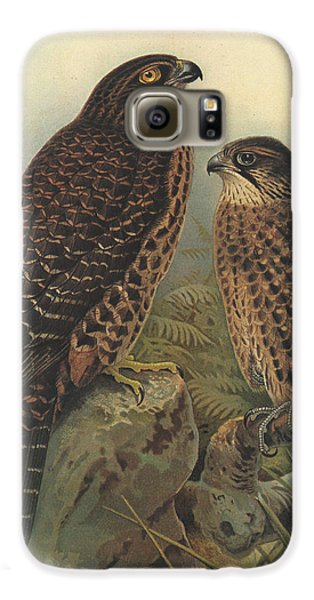 New Zealand Falcon Galaxy S6 Case by Dreyer Wildlife Print Collections