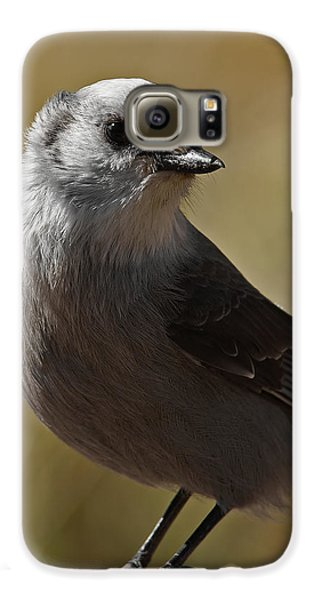 Northern Mockingbird Galaxy S6 Case by Ernie Echols