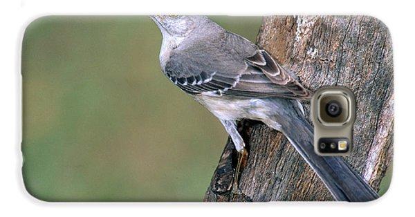 Northern Mockingbird Galaxy S6 Case