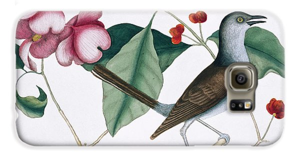 Northern Mockingbird Galaxy S6 Case by Natural History Museum, London