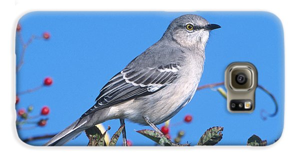 Northern Mockingbird Galaxy S6 Case by Paul J. Fusco