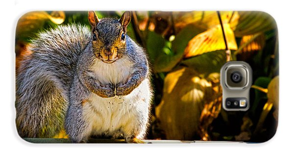 One Gray Squirrel Galaxy S6 Case by Bob Orsillo