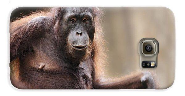 Orangutan Galaxy S6 Case by Richard Garvey-Williams