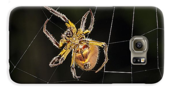 Orb-weaver Spider In Web Panguana Galaxy S6 Case by Konrad Wothe