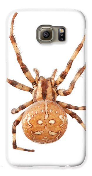 Orb Web Spider Galaxy S6 Case by Natural History Museum, London