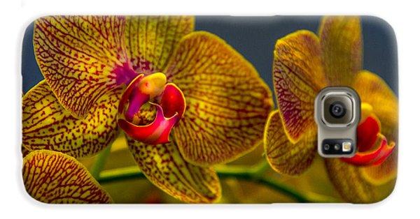 Orchid Color Galaxy S6 Case