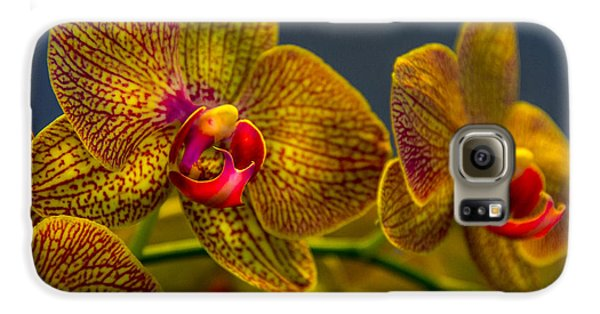 Orchid Galaxy S6 Case - Orchid Color by Marvin Spates