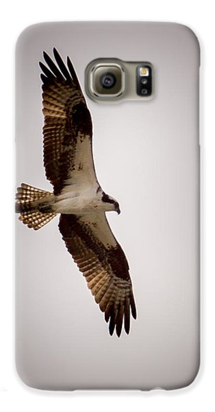 Osprey Galaxy S6 Case by Ernie Echols