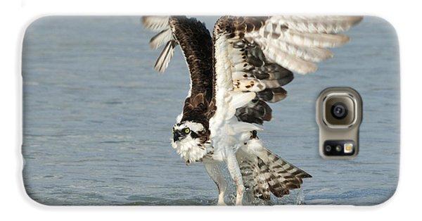 Osprey Taking Off Galaxy S6 Case