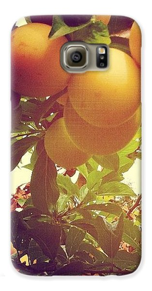 Our Plum Tree Is Loaded This Year...any Galaxy S6 Case