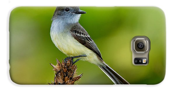 Pale-edged Flycatcher Galaxy S6 Case by Anthony Mercieca
