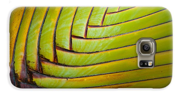 Palm Tree Leafs Galaxy S6 Case by Sebastian Musial