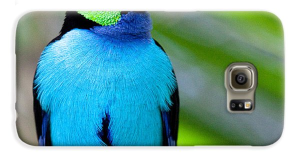 Paradise Tanager Galaxy S6 Case by Nathan Rupert