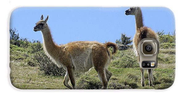 Patagonian Guanacos Galaxy S6 Case by Michele Burgess