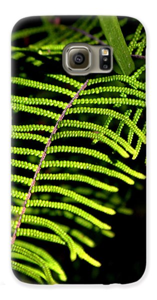 Galaxy S6 Case featuring the photograph Pauched Coral Fern by Miroslava Jurcik