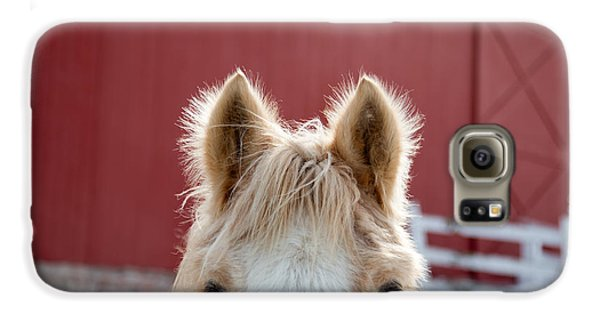 Horse Galaxy S6 Case - Peek A Boo by Courtney Webster