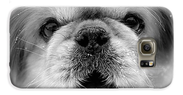 Pekingese Puppy Galaxy S6 Case by Marvin Blaine