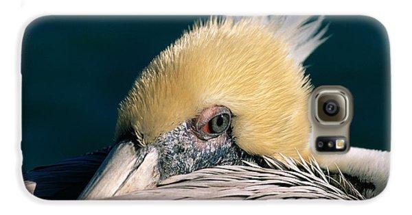 Pelican Portrait Galaxy S6 Case