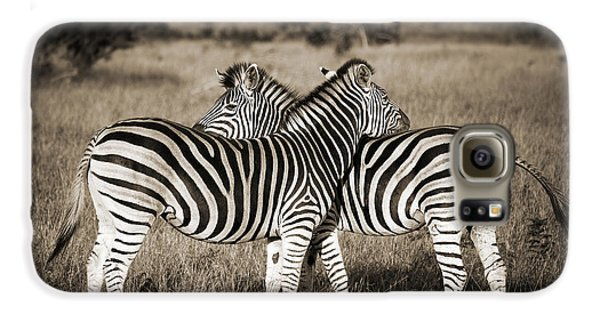 Perfect Zebras Galaxy S6 Case by Delphimages Photo Creations
