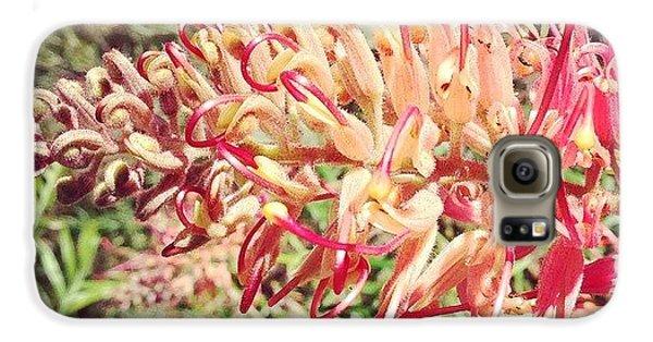 Decorative Galaxy S6 Case - Australian Grevillea Flower by Sinead Connell