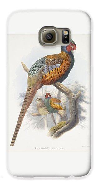 Phasianus Elegans Elegant Pheasant Galaxy S6 Case by Daniel Girard Elliot