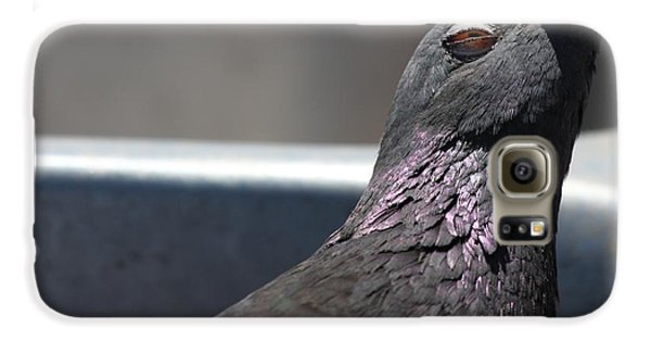 Pigeon In Ecstasy  Galaxy S6 Case by Nathan Rupert
