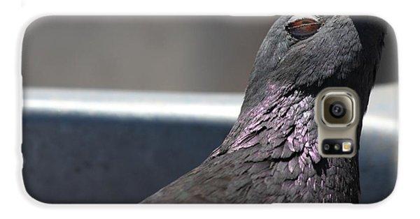 Pigeon In Ecstasy  Galaxy S6 Case
