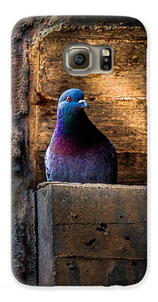 Pigeon Of The City Galaxy S6 Case by Bob Orsillo