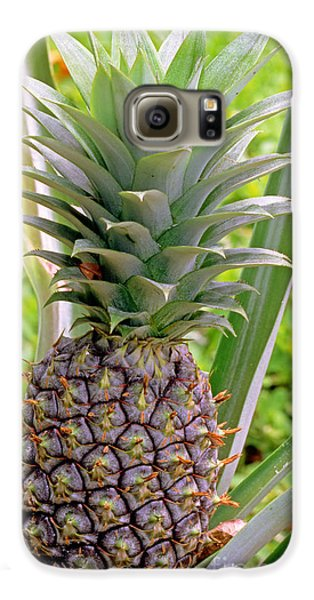 Pineapple Plant Galaxy S6 Case by Millard H. Sharp