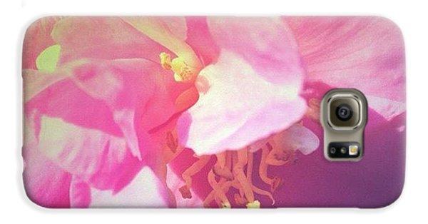 Pink Camellia Vintique Edit Galaxy S6 Case