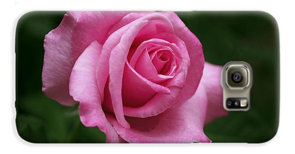 Pink Rose Perfection Galaxy S6 Case