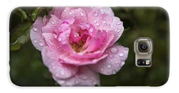 Pink Rose With Raindrops Galaxy S6 Case