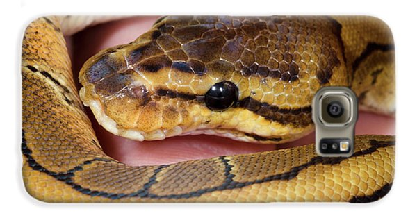 Pinstripe Royal Python Galaxy S6 Case