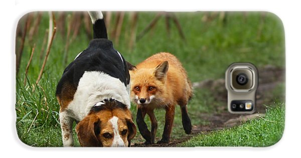 Mammals Galaxy S6 Case - Probably The World's Worst Hunting Dog by Mircea Costina Photography
