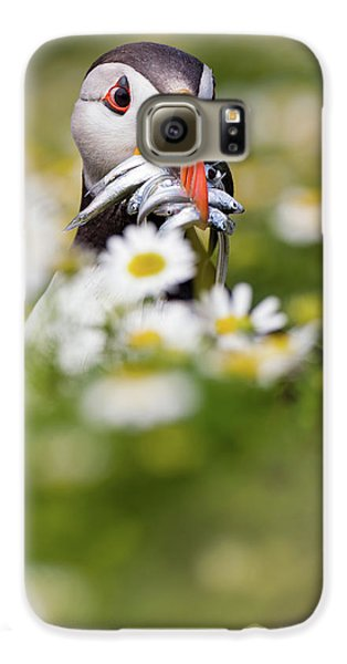 Puffin Galaxy S6 Case - Puffin & Daisies by Mario Su?rez