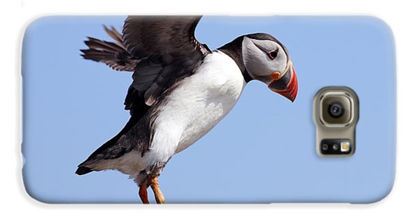Puffin In Flight Galaxy S6 Case by Grant Glendinning