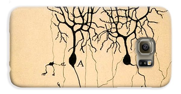 Purkinje Cells By Cajal 1899 Galaxy S6 Case