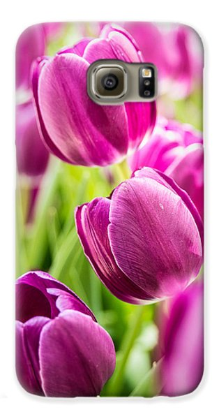 Purple Tulip Garden Galaxy S6 Case by  Onyonet  Photo Studios