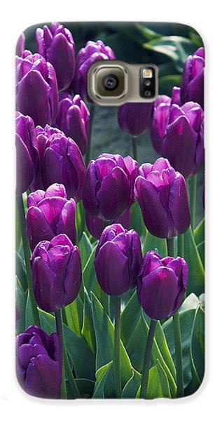 Purple Tulips Galaxy S6 Case