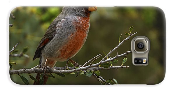 Pyrrhuloxia Portrait Galaxy S6 Case
