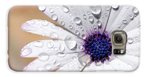 Rain Soaked Daisy Galaxy S6 Case