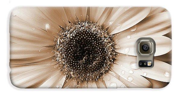 Raindrops On Gerber Daisy Sepia Galaxy S6 Case