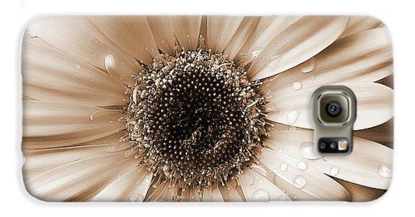 Daisy Galaxy S6 Case - Raindrops On Gerber Daisy Sepia by Jennie Marie Schell