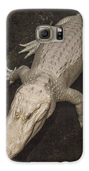 Rare White Alligator Galaxy S6 Case