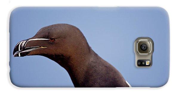 Razorbill Galaxy S6 Case - Razorbill Alca Torda,  Portrait by James Silverthorne