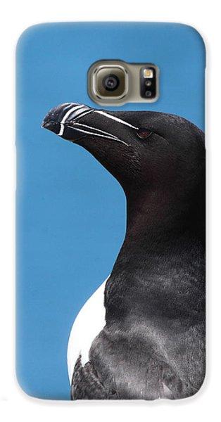 Razorbill Profile Galaxy S6 Case by Bruce J Robinson