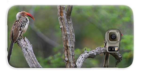 Red-billed Hornbills Galaxy S6 Case by Bruce J Robinson