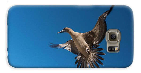 Red-footed Booby (sula Sula Websteri Galaxy S6 Case by Pete Oxford