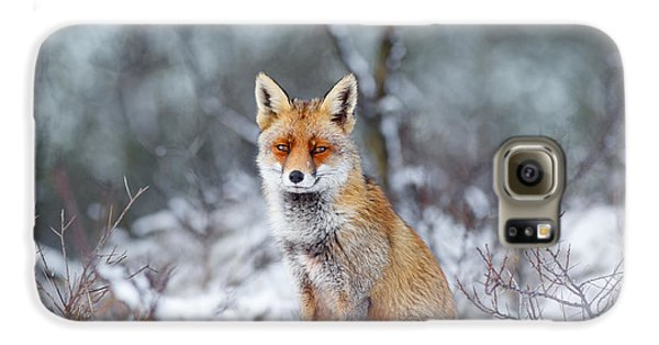 Red Fox Blue World Galaxy S6 Case by Roeselien Raimond